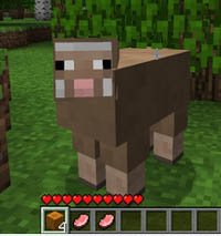 how to grow cocoa beans in minecraft ps4